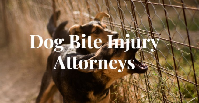 Hiring a good dog bite lawyer will be best for your injury case